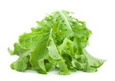 绿色莴苣沙拉新鲜的叶子 免版税库存图片