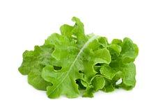绿色莴苣沙拉新鲜的叶子 免版税库存照片