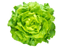 绿色莴苣沙拉头 库存图片
