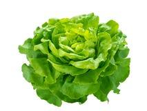 绿色莴苣沙拉头 库存照片