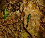 绿色蜻蜓坐地面 免版税库存照片