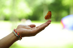 黄色蝴蝶。 免版税库存图片
