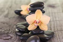 黄色蝴蝶兰和黑石头在被风化的甲板 库存图片