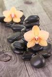 黄色蝴蝶兰和黑石头在被风化的甲板 图库摄影
