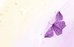 紫色蝴蝶卡片 免版税库存照片