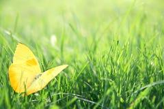 黄色蝴蝶在绿草背景中 图库摄影