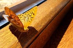 黄色蝴蝶坐木窗架 免版税库存图片