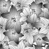 黑色蝴蝶花卉花纹花样白色 库存例证