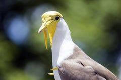 黄色头被掩没的田凫鸟 库存图片