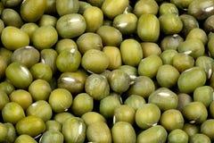 绿色绿豆宏指令  免版税图库摄影