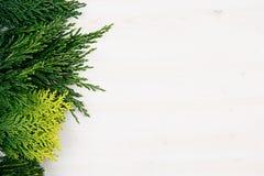 绿色年轻针叶树射击装饰边界与拷贝空间的在白色木桌背景 免版税图库摄影
