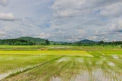 绿色水稻领域、美丽的天空和云彩软的焦点  国家生活方式在泰国 库存图片