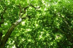 绿色 免版税库存图片