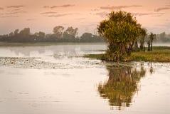 黄色水billabong在黎明,北方领土,澳大利亚 免版税库存照片