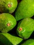 绿色Advacado背景 免版税库存照片