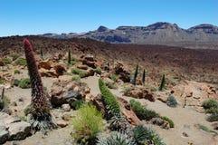 黑色blanca del高涨huevos的eggs使los批次蒙大拿显示西班牙teide tenerife视图的国家公园路径环境美化 库存图片