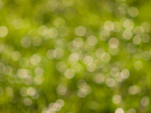 绿色bokeh光在晴天 库存照片