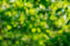 绿色bokeh背景 绿色Bokeh 绿色bokeh摘要, defoc 免版税库存图片