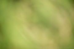 绿色bokeh背景 免版税图库摄影