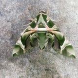绿色Butterfly123 免版税库存图片