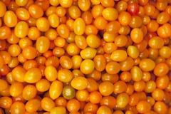 黄色Cerry蕃茄 免版税库存图片
