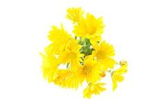 黄色chrysantemum的诗句安排 免版税库存图片