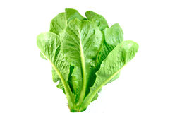 绿色COS沙拉 免版税库存照片
