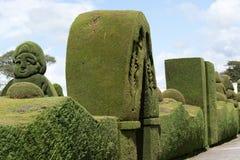 绿色cypres修剪的花园在厄瓜多尔 库存照片