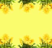 黄色gerber 图库摄影
