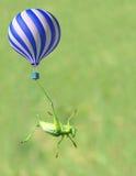 绿色katydid和热气球 库存照片