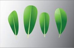 绿色lelawade eleaf背景 免版税库存照片