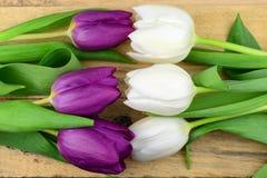 紫色nd白色郁金香背景和与空的空间的老使用的被打结的木背景 免版税库存照片