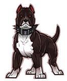 黑色pitbull 免版税库存图片