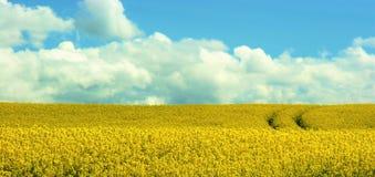 黄色rapefield 免版税库存图片