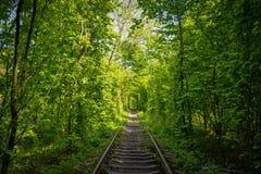 绿色tunel在乌克兰 免版税库存图片