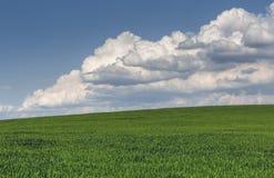 绿色wheatfield和strom云彩 免版税库存照片