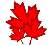艺术加拿大夹子叶子槭树 免版税库存照片