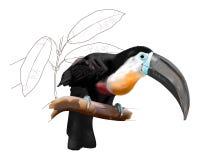 艺术品开帐单的通道toucan向量 免版税库存图片