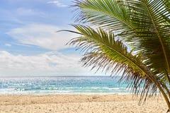 艺术品设计自然海运纹理通知 温暖的沙子 绿色棕榈树 免版税图库摄影