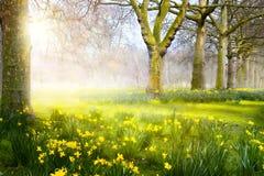艺术复活节风景;春天花在公园; 免版税库存照片