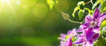 艺术夏天或春天美好的庭院背景 免版税库存照片