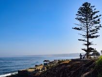 艺术家油漆在拉霍亚小海湾的一棵树下 免版税库存照片