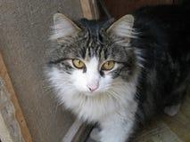 艺术家猫  免版税库存照片