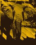艺术性的大象背景 免版税库存照片