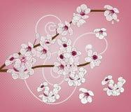 艺术性的开花分行樱桃 图库摄影