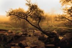 艺术性的日落在Padley峡谷,德贝郡 免版税库存图片