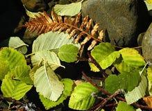 艺术性的浮动的叶子 库存照片