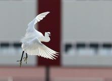 艺术性的飞行鸟 免版税库存照片