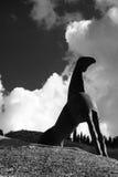艺术性BW的马 免版税库存图片