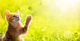 艺术愉快的小猫;与蝴蝶的逗人喜爱的猫戏剧 免版税图库摄影
